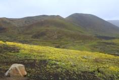 na te wulkany miałam wejść