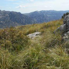 ścieżka powoli ginie w trawie