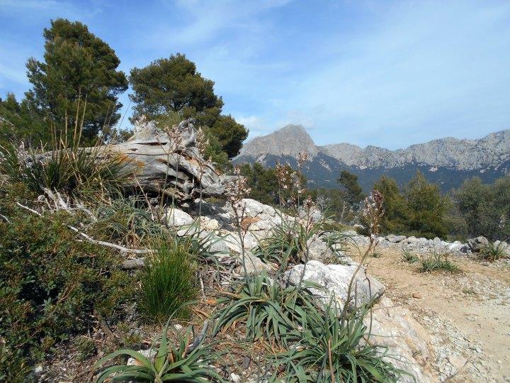 w drodze na Puig de sa Bassa