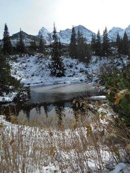 staw w odsłonie zimowej