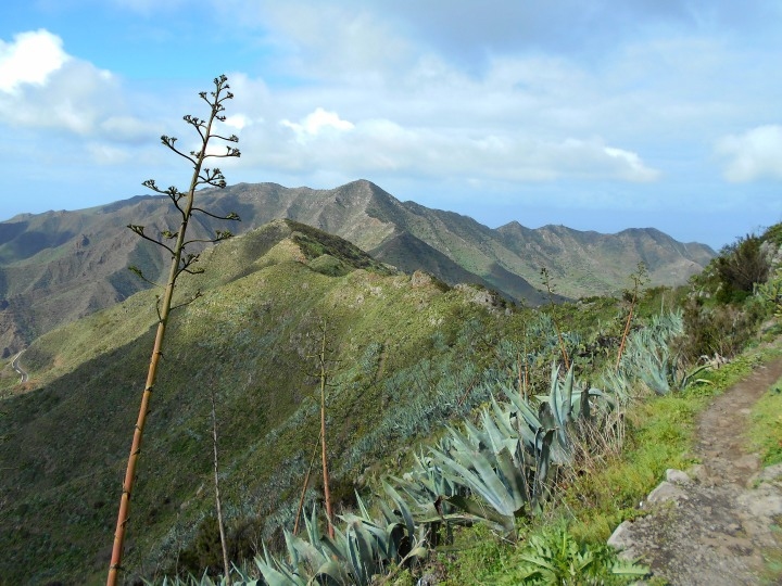 Tenerife Teno