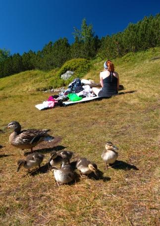 zmasowany atak kaczek