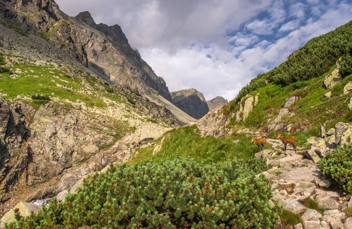 szlak Zbójnicka Chata