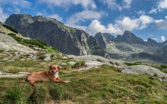 pies schroniskowy