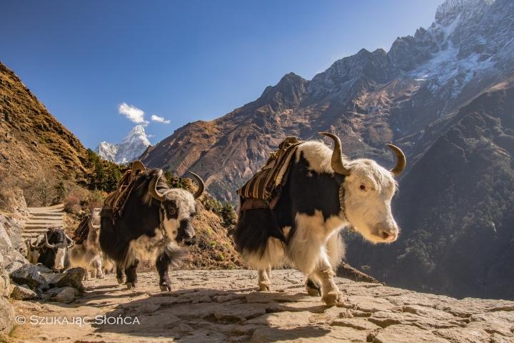jaki Nepal trekking EBC Himalaje