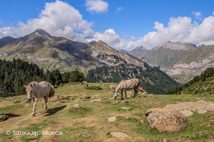 Pireneje konie trekking